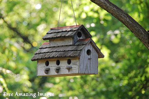 free amazing images 26 best and most creative bird house