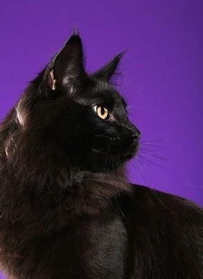 warriors shadowclan cats showing