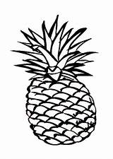 Pineapple Coloring Outline Drawing Hawaiian Clipart Smooth Adult Fruit Cartoon Cayenne Delicious Pages Cliparts Clip Sheet Characters Template Sketch Drawings sketch template