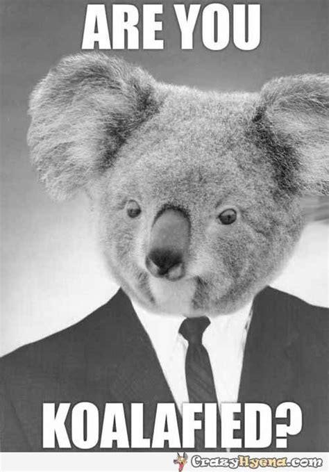 Koala Meme - 2048 dankity danky dank dank meme dream
