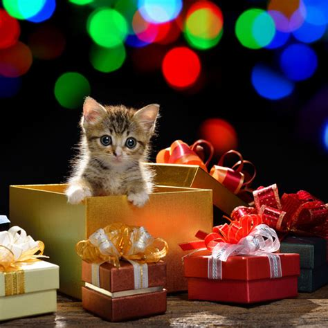 cat christmas tree water 6 christmas safety tips for cat owners catster 5842