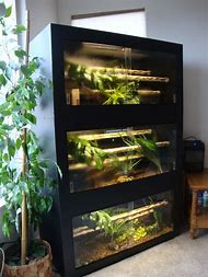 Best Snake Cage Ideas And Images On Bing Find What You Ll Love