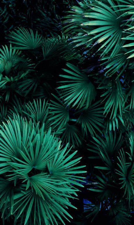 Aesthetic Olive Green Wallpaper Iphone by Emerald Green Color Emerald Green Green Plants