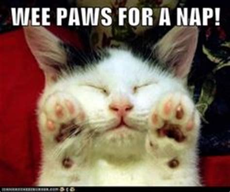 Middle Finger Cat Meme - meme pictures cat memes and middle fingers on pinterest