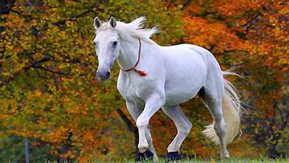Horse Wallpapers Wallpapertag Macbook