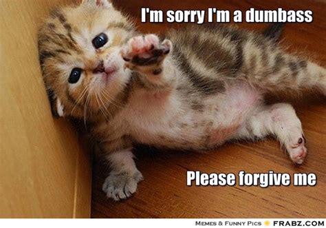 Memes Sorry - yom kippur sorry memes bang it out funny jewish videos articles top 10s jewish apartments