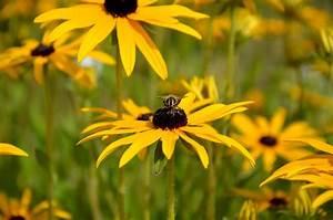 Weidenruten Zum Pflanzen Kaufen : sonnenhut samen aussaat zum pflanzen kaufen ab 0 59 ~ Lizthompson.info Haus und Dekorationen