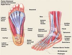 8 Best Foot Pictures Images On Pinterest