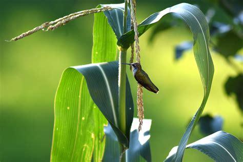 นกฮัมมิ่ง (Humming Bird) นกที่ตัวเล็กที่สุดในโลกตัวแรก ...