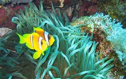 Fishes Wallpapers Underwater Fish Sea Ocean Clown