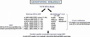 Schematic Diagram Of Blood Group Genotyping Strategy  Abbreviations Are