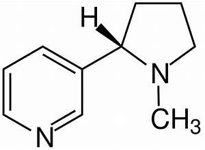 Nikotin Von Fensterscheiben Entfernen : nicotin wikipedia ~ Markanthonyermac.com Haus und Dekorationen