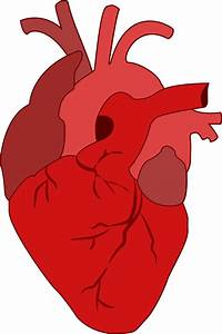 Realistic Heart Images