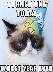 grumpy cat birthday grumpy cat birthday the gossip