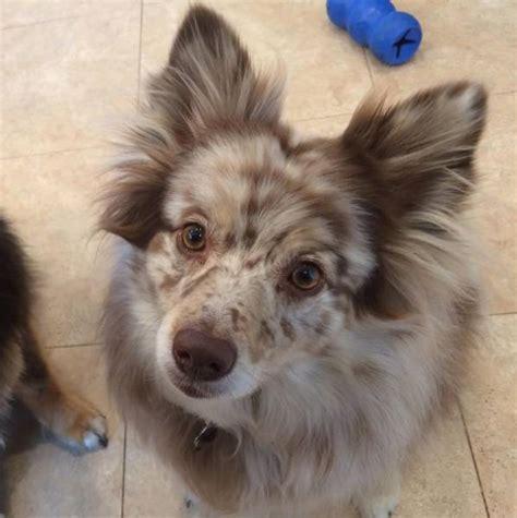 mixed breed dogs   undeniably cute  pics