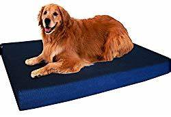 best dog bed for hip dysplasia hip problems With best dog bed for hip dysplasia