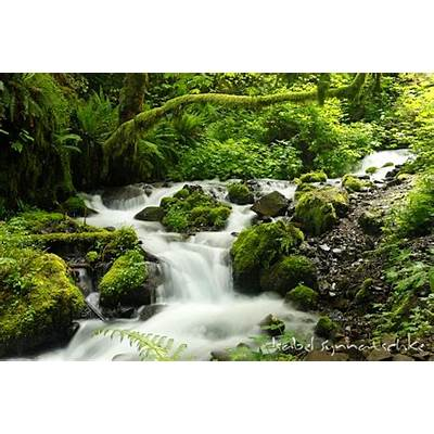 Nature Photography :: Gallery Columbia River Gorge