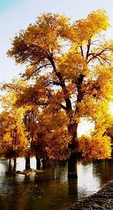 Awesome, Autumn, Wallpapers, For, Your, Iphone, Hd