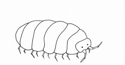 Coloring Rolly Polly Bugs Rollie Pollie Sketch