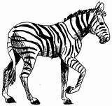 Zebra Coloring Animals Pages Printable Animal Kb Drawings sketch template