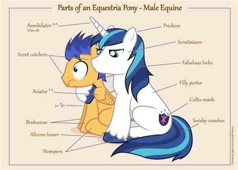pony male parts equestria mlp flash equine hair friendship e621 deviantart magic sentry armor shining cutie dm29 sitting anatomy eyes