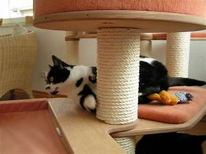 More For Cats Kratzbaum : 1000 images about cat houses catifying on pinterest cat products cat furniture and catwalks ~ Whattoseeinmadrid.com Haus und Dekorationen