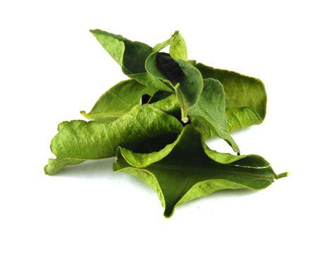 kaffir lime leaves lime leaf dried makrut lime leaves savory spice