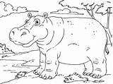 Hippo Coloring Pages Printable sketch template