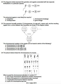 worksheet meiosis sexual reproduction editable tpt