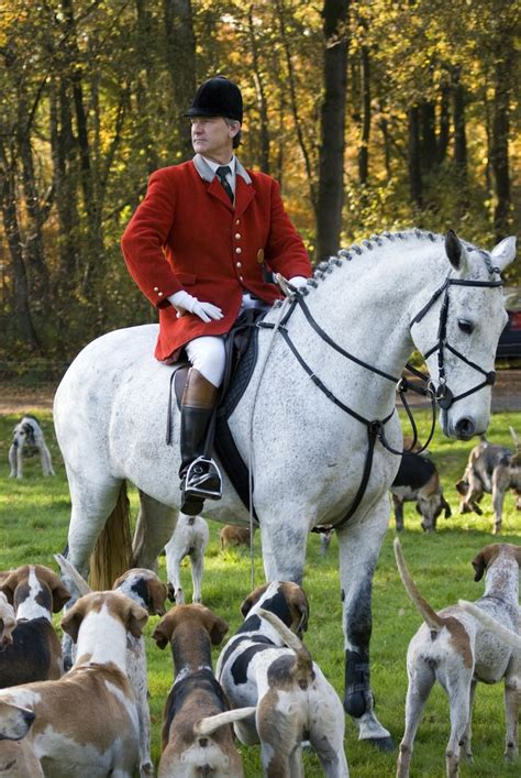 hunting fox horse ho tally horses equestrian foxhunting hunt hunter english netherlands friesland riding hounds jumper horseback country hunters decor