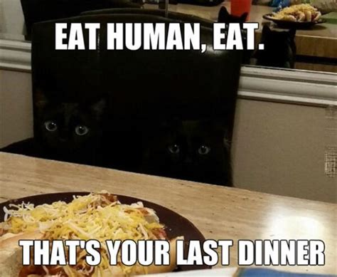 Meme Eat - eat human eat that is your last dinner memes and comics