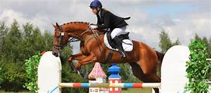 Competition Horse Supplement Essential Vitamin and ...