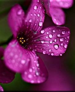146 best Dewdrops & Rain images on Pinterest | Water drops ...