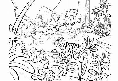 Jungle Coloring Pages Printable Animals Children Adults