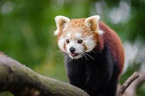 Top 10 Most Beautiful Endangered Animals - The Mysterious ...