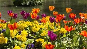 Arbuste Plein Soleil Longue Floraison : fleurs vivaces d 39 t liste ooreka ~ Premium-room.com Idées de Décoration