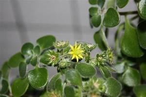 Euphorbia Trigona Vermehren : k bel und zimmerpflanzen bitte gebt uns einen namen ~ Orissabook.com Haus und Dekorationen