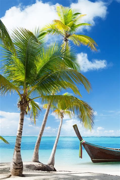 palmen boot tropischen meer strand wolken iphone