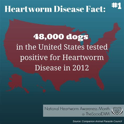 heartworm treatment 11 best heartworm awareness month images on pinterest facts knowledge and veterinarians