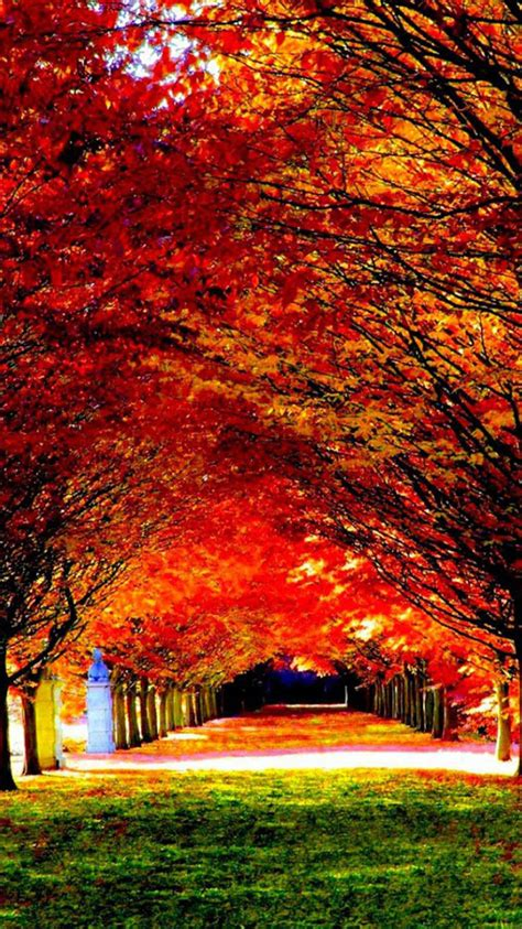 Autumn Wallpapers For Iphone by 50 Iphone 6 Autumn Wallpaper On Wallpapersafari