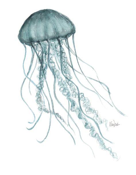 Box Jellyfish Drawing At Getdrawings Com Free For