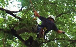 omaha tree
