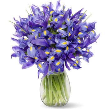 Cffi1001 Blue Iris Bouquet To Chisinau (kishinev), Moldova