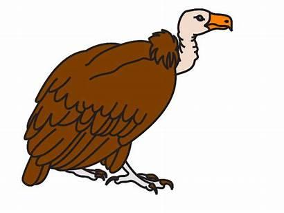 Vulture Clip Clipart Brown Clipartpanda Svg