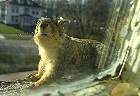 Different Ways Squirrel Can Access Your Home