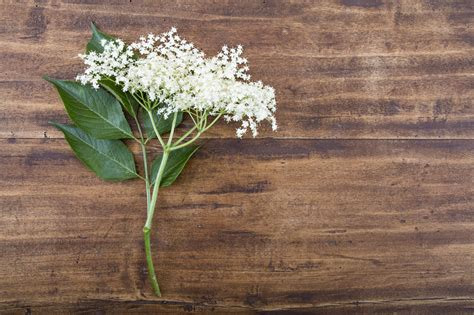fiori selvatici viola salvia e fiori selvatici le ricette della chef stellata