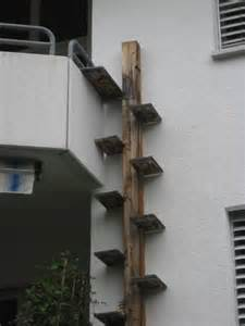 cat ladder cat ladders loft bed