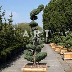 fiche conseil l39erable du japon plantation et entretien With exceptional allee de jardin originale 0 amenagement allee de jardin et chemin de pierre en 95 idees