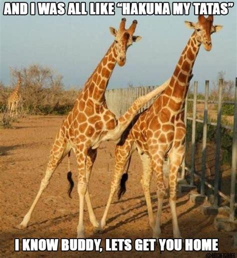 Drunk Giraffe Meme - best 25 drunk giraffe ideas on pinterest tenth doctor doctor who rose tyler and donna noble