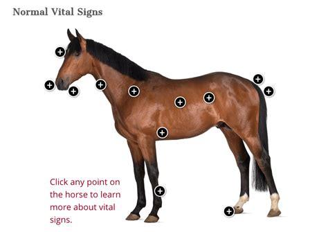 horse normal vital signs weight horses healthy adult health thehorse indicators equine chart calculator behavior values care fluid